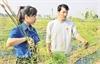 Bỏ phố về làng trồng măng tây xanh
