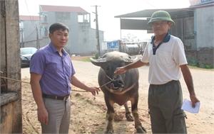 Trạm Khuyến nông Hiệp Hòa tiếp nhận Dự án phát triển giống trâu