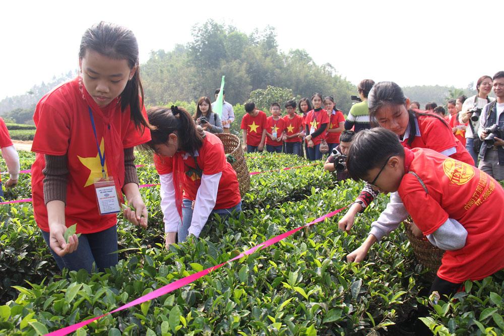 Công ty Du lịch Việt Hưng Tourist (TP Bắc Giang) đưa học sinh đến trải nghiệm tại vùng chè Bản Ven, xã Xuân Lương (Yên Thế).