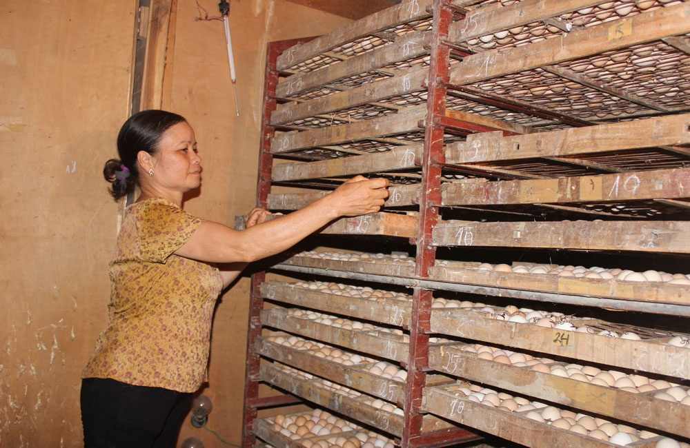 Quỹ hỗ trợ nông dân huyện Lạng Giang đạt hơn 4 tỷ đồng