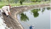 Cá chết tại hồ Công viên Hoàng Hoa Thám do nhiễm khuẩn