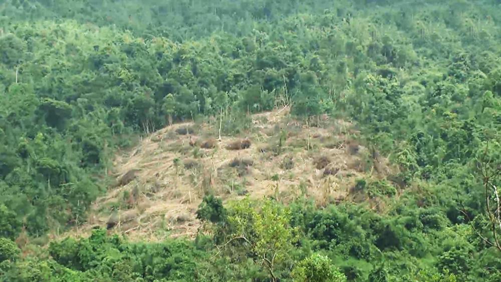 Thành lập Tổ công tác liên ngành bảo vệ và phòng, chống phá rừng trên địa bàn xã Lục Sơn