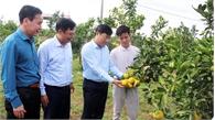 Chú trọng tuyên truyền, quảng bá Ngày hội trái cây Lục Ngạn