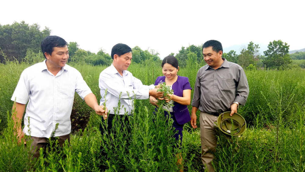 Bac Giang establishes several herbal specilaized cultivation areas