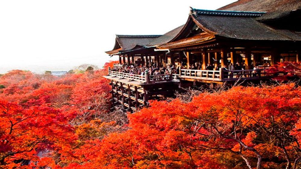 Những trải nghiệm đặc biệt tại Nhật Bản vào dịp Tết