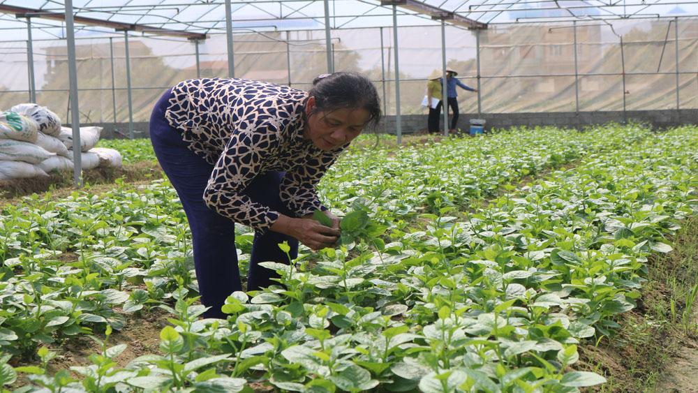 Tổng giá trị sản xuất ngành nông, lâm nghiệp, thủy sản ước đạt 4.371,8 tỷ đồng