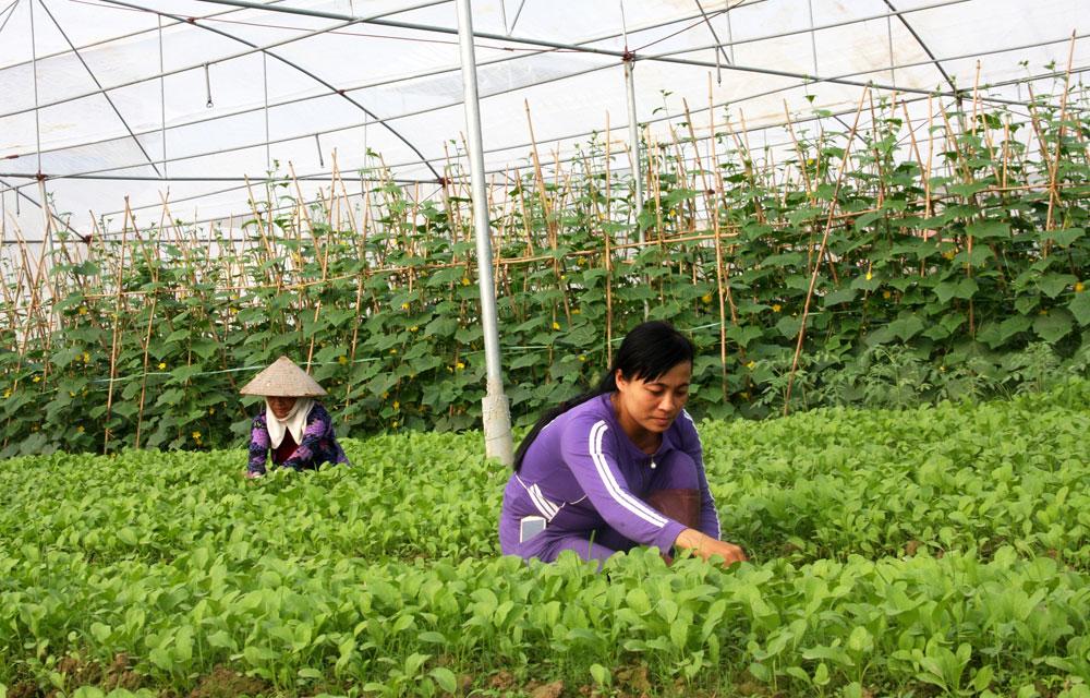 Hỗ trợ nông dân làm giàu