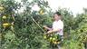 Ngày hội trái cây Lục Ngạn lần thứ 2: Mở rộng quy mô, thu hút du khách