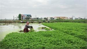 Hiệp Hòa giảm 851 hộ nghèo