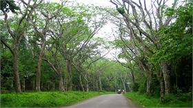 Kinh nghiệm đi du lịch rừng an toàn