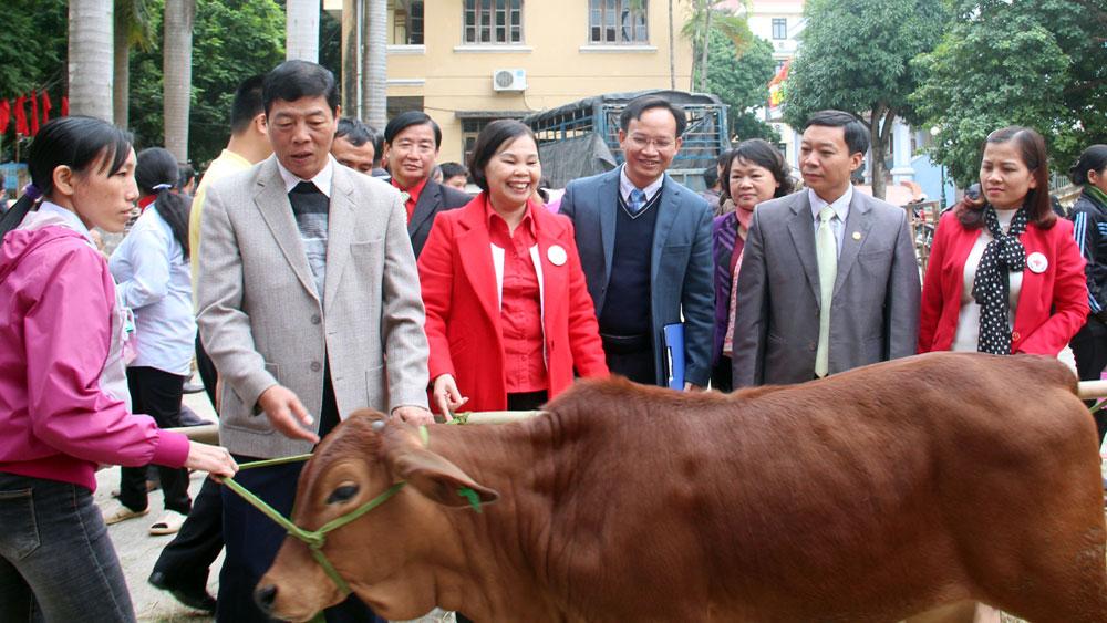 Ngân hàng bò: Món quà sinh kế giúp người nghèo