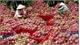Khuyến khích doanh nghiệp Việt tham gia thị trường trái cây