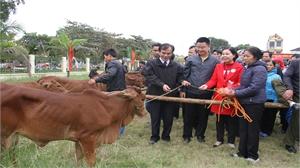 Hỗ trợ bò giống cho 60 hộ nghèo huyện Việt Yên