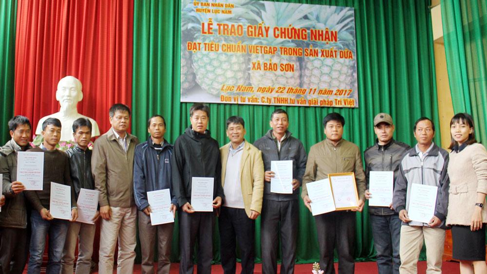 Dứa Lục Nam được công nhận đạt tiêu chuẩn VietGAP