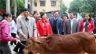 """Cow bank"", a livelihood gift to assist poor people"