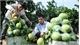 Luc Ngan fruit festival to impress visitors