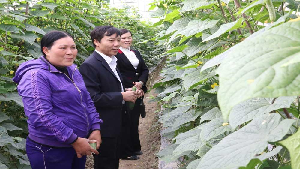 Khảo sát một số mô hình trồng rau sạch tại xã Việt Tiến