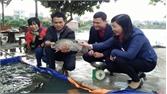 Nghiệm thu mô hình nuôi cá rô phi thương phẩm theo tiêu chuẩn VietGAP