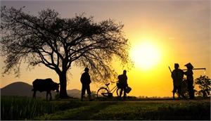 Một buổi chiều ở đầu làng