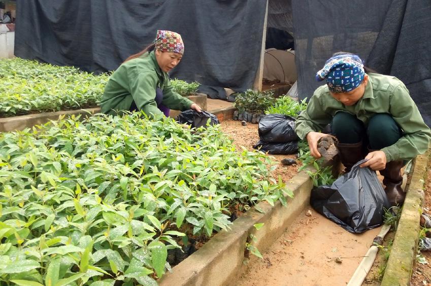 Yên Thế trồng rừng tập trung vượt 69% kế hoạch