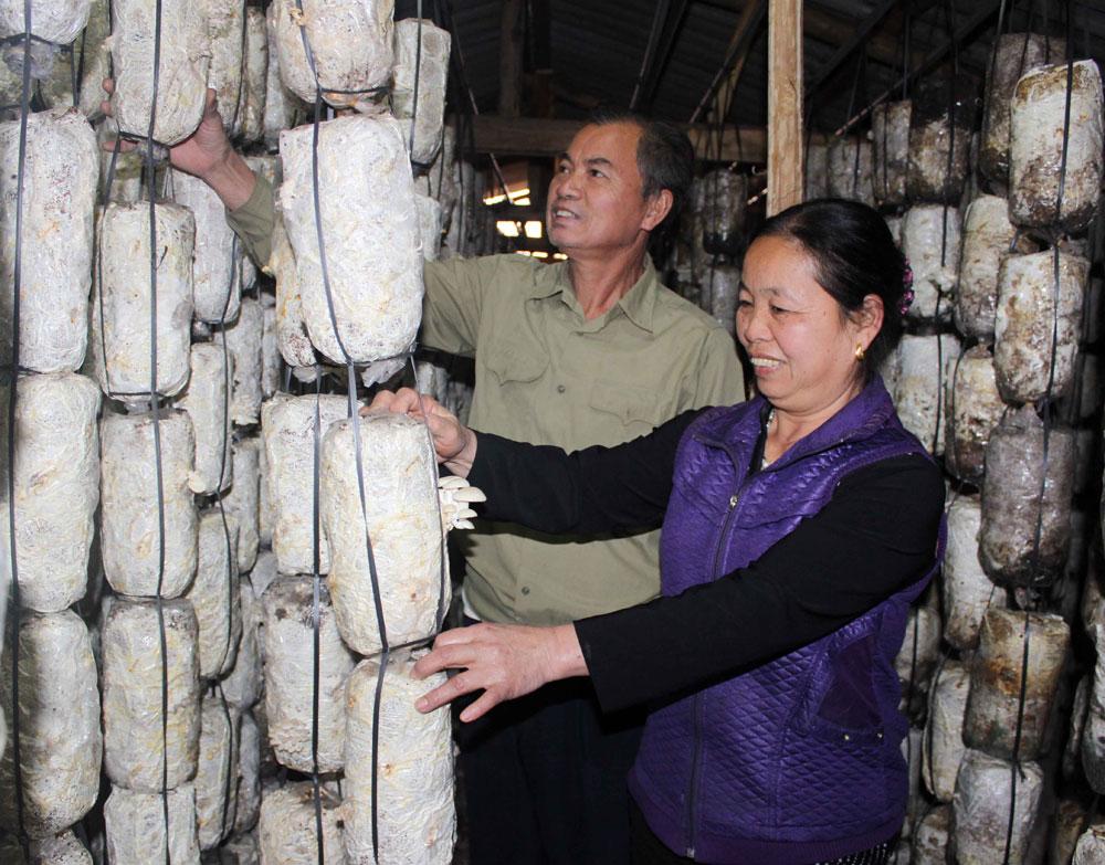 Bà Đoàn Thị Cầu kiểm tra khu trồng nấm sò. Ảnh: Mạc Yến.