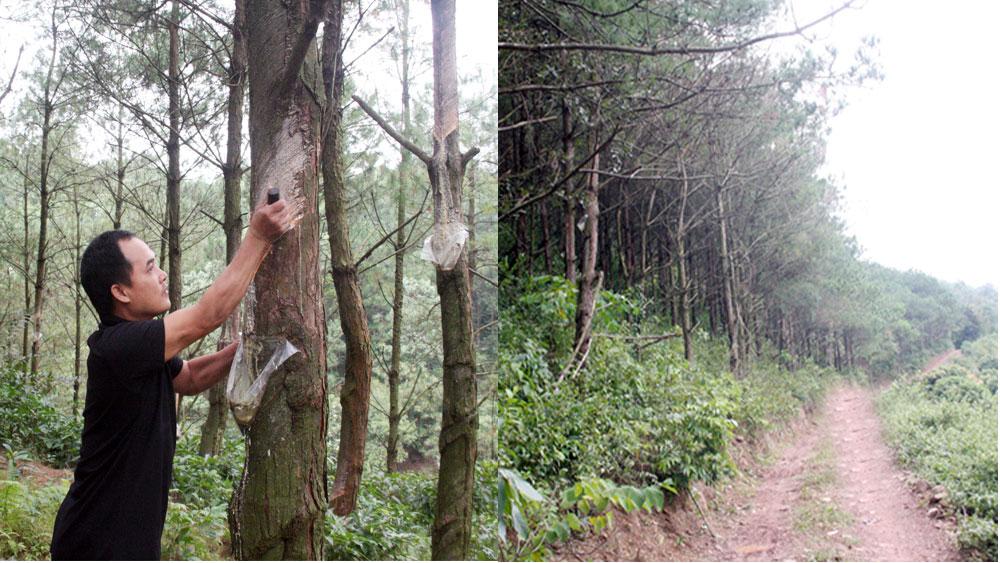 Dành cả tuổi trẻ  cho rừng xanh