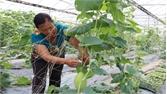 TP Bắc Giang: Giảm gần 80 hộ nghèo, cận nghèo so với năm 2016