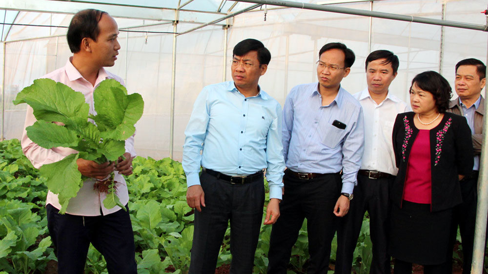 Phó Chủ tịch UBND tỉnh Dương Văn Thái cùng đoàn công tác thăm mô hình trồng rau CNC tại xã Thanh Vân (Hiệp Hòa).