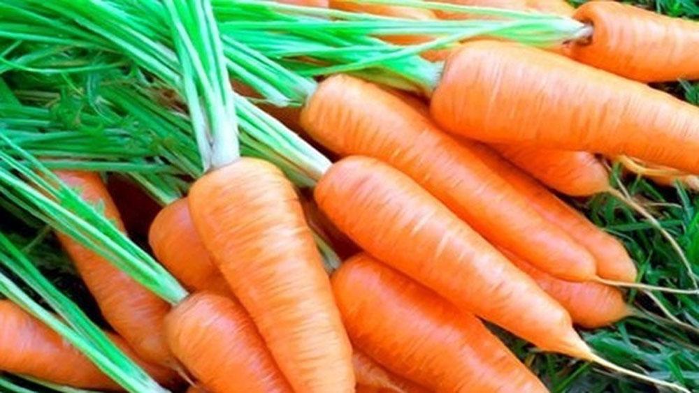 Cà rốt ngon vỏ sáng, cầm thấy nặng
