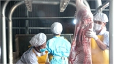 Hiệp Hòa: Đưa vào sử dụng dây chuyền giết mổ gia súc an toàn