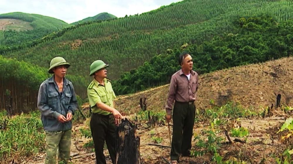 Giám sát chặt chẽ việc giao rừng, xử lý nghiêm trường hợp tự ý chuyển đổi mục đích sử dụng rừng