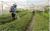 HTX sản xuất, kinh doanh nông sản sạch Đa Mai