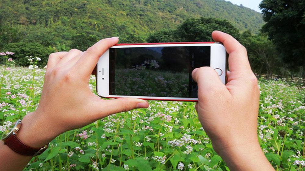 Vườn tam giác mạch hút hồn du khách ở Ninh Bình