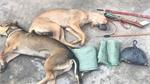 Bắt 2 đối tượng trộm cắp chó