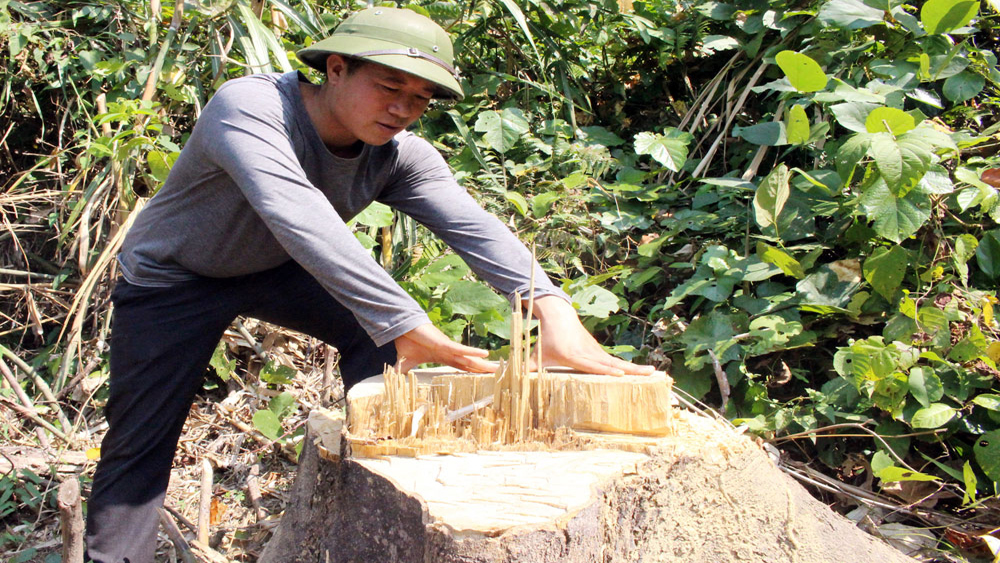 Yên Thế tăng cường quản lý, bảo vệ rừng Thác Ngà