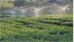 Bac Giang province work to build smart agriculture