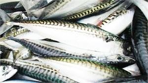 Nhận biết cá tươi không bị ướp đạm