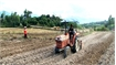Son Dong expands potato areas for processing