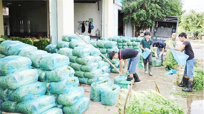 Hiep Hoa expands VietGAP water dropwort area