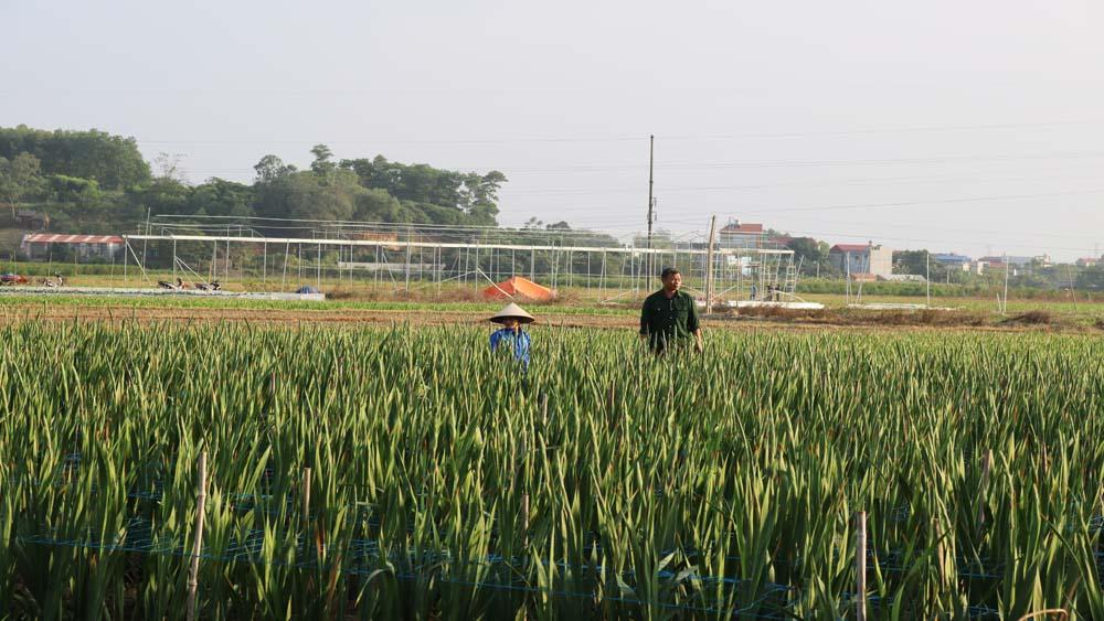 Giá trị sản xuất trên đơn vị diện tích đất nông nghiệp ước đạt 120 triệu đồng/ha/năm
