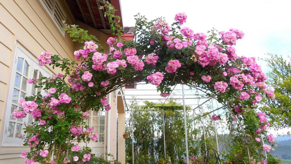 Những loài hoa dễ trồng trong vườn nhà bạn