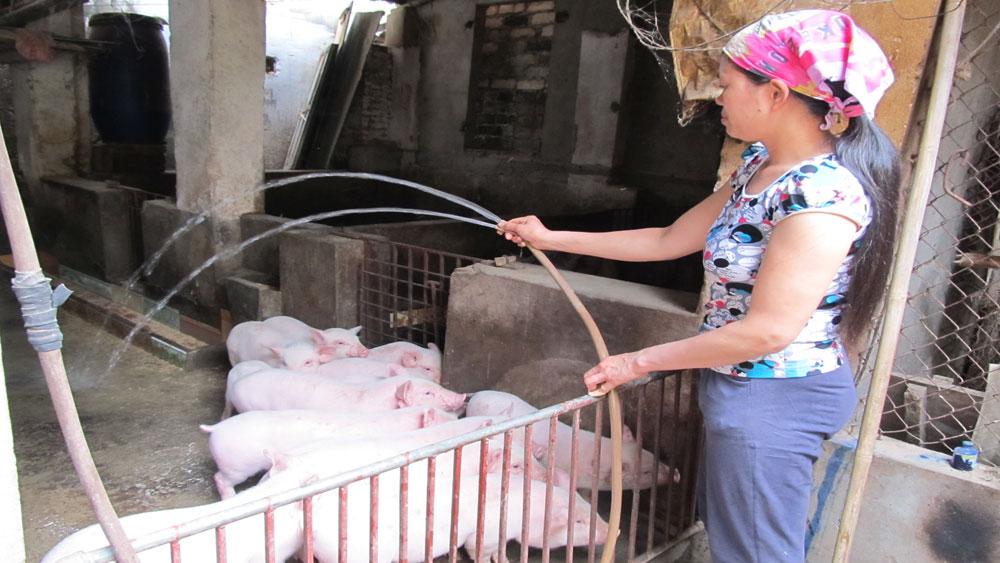 Gia đình chị Nguyễn Thị Mây thôn Tân Luận, xã Phi Mô luôn vệ sinh chuồng trại chăn nuôi sạch sẽ.                                                                            Ảnh: Vân Anh