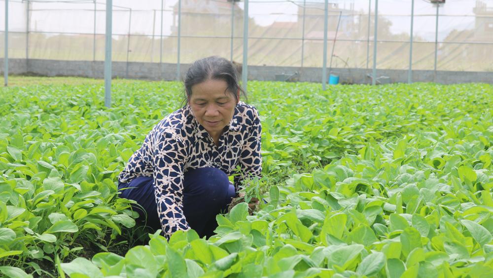 Hỗ trợ hơn 1,6 tỷ đồng phát triển sản xuất nông nghiệp hàng hóa và dồn điền, đổi thửa