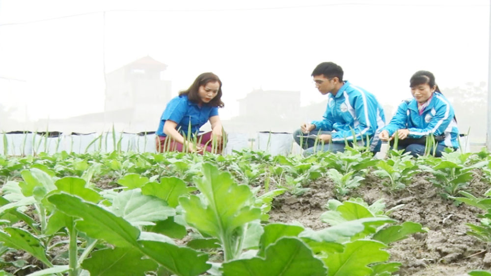 Bac Giang's young people set up in business