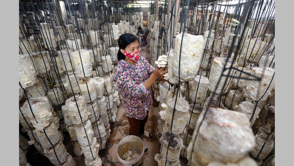 Mô hình trồng nấm công nghệ cao