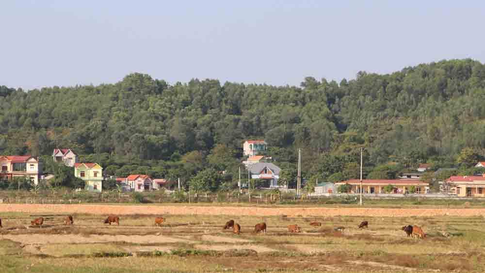 Xây dựng phương án phòng, chống đói, rét cho vật nuôi vụ đông xuân