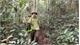 Giữ màu xanh cho rừng