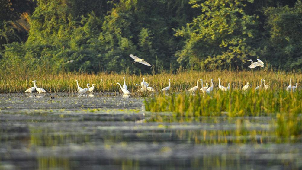 Kỳ thú đầm Vân Long mùa chim về