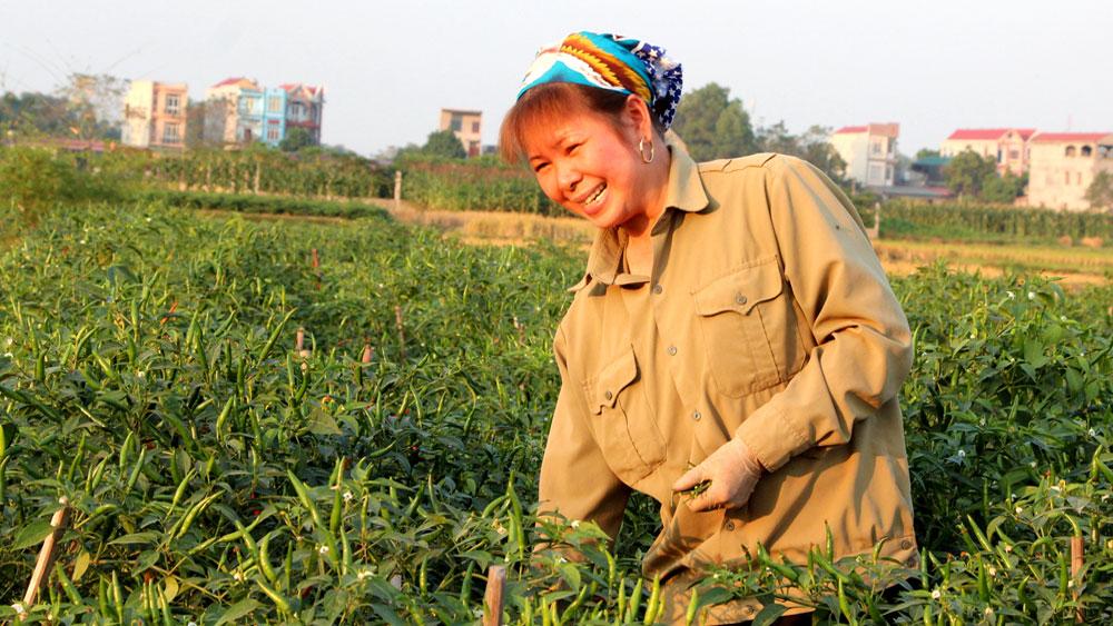 Trồng ớt cho thu nhập gần 500 triệu đồng/ha