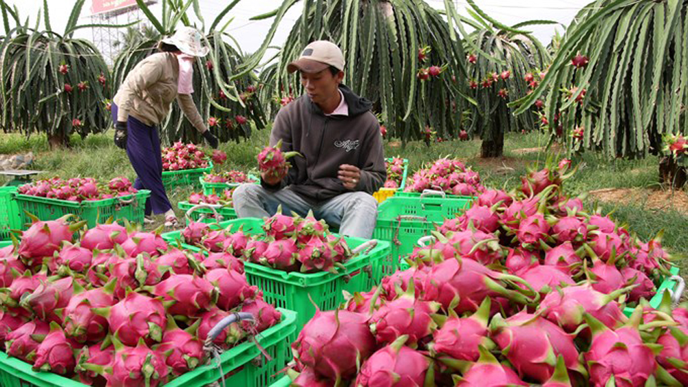Xuất khẩu nông lâm sản đạt kỷ lục mới hơn 36 tỷ USD